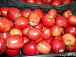 Яблоки apples - photo 4