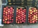Яблоки apples - photo 5