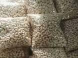 Cashew Kernel Nut - photo 2