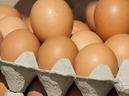 Chicken egg, Belarus