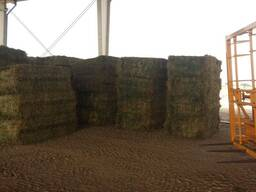 Grade A Alfalfa/Lucerne Hay for sale in South Africa