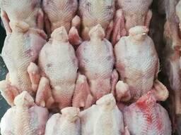 Предприятие на постоянной основе реализует курицу несушку