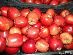 Яблоки apples - фото 4